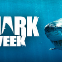 What's Worth Interrupting Shark week? CFD2